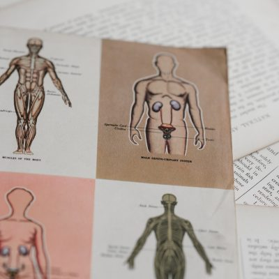 Photo of medical drawings of bodys and their sexual organs